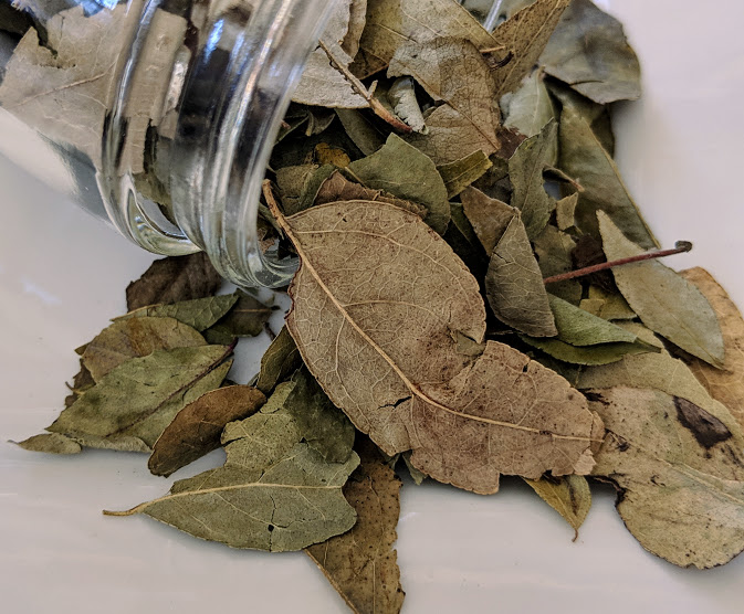 Curry Leaves ~ Certified Organic