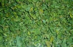 Fenugreek Leaves 2.jpg